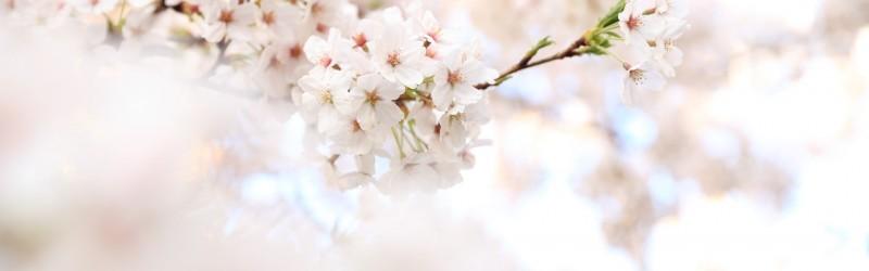 春期講習のお知らせ